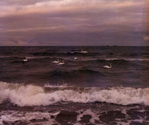 sea, purple, and sky image