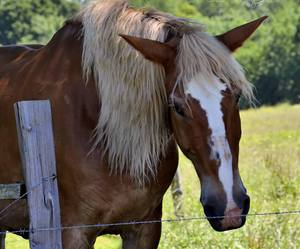 brown, horse, and pasture image