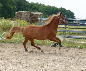 free, fun, and horse image