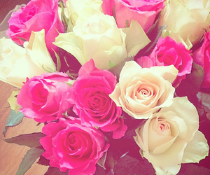 pink, roses, and white image
