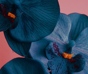 flowers, blue, and orchid image