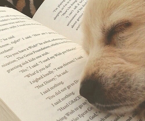 book, dog, and cute image