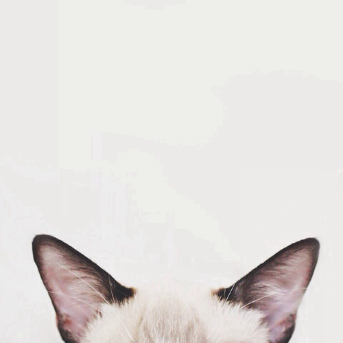 adorable, ears, and kitten image