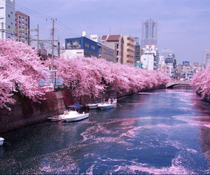japan, nature, and love image