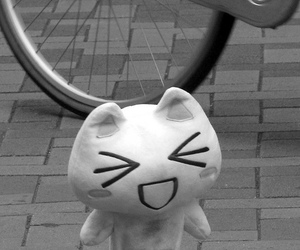 2009, b&w, and cat image