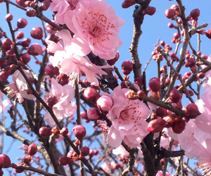beautiful, beautiful nature, and flowers image