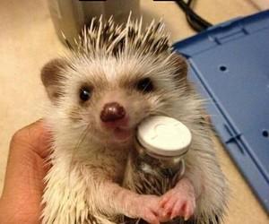animals, funny, and hedgehog image