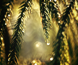 close-up, drops, and forest image