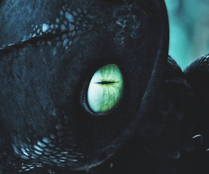 cat, toothless, and cute image
