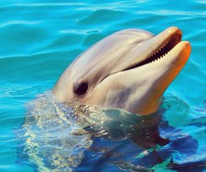 animal, delfin, and dolphin image