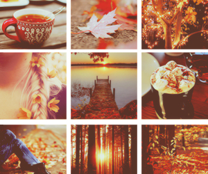 autumn, flowers, and cosy image