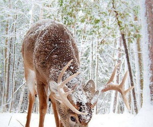 deer, snow, and trees image