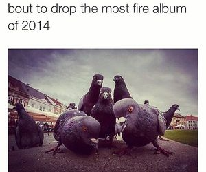 funny, lol, and pigeon image