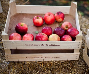 apple and FRUiTS image