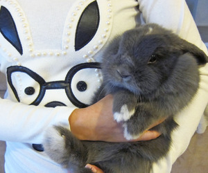 funny, pets, and rabbit image