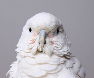 parrot, white, and bird image