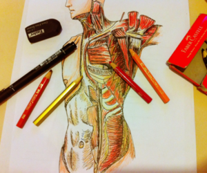 anatomy, color, and art image