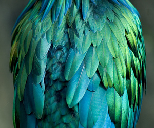 bird, feather, and blue image