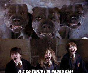 harry potter, dog, and fluffy image