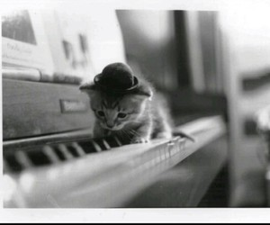 cats, piano, and love image