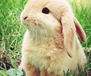 animals, kawaii, and cute image