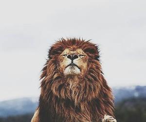 beautiful, king, and nature image