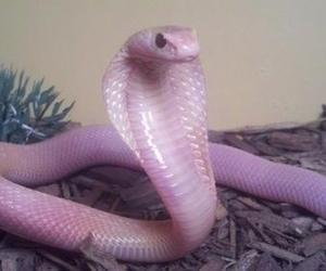cobra, grunge, and pastel image