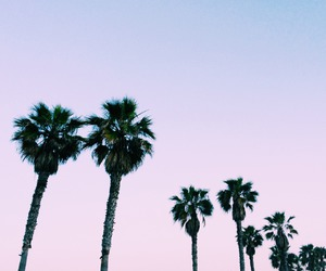 sky, california, and palm trees image