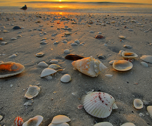 beach, shell, and sunset image
