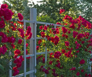 flowers and red roses image