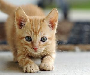 cat and kittie image