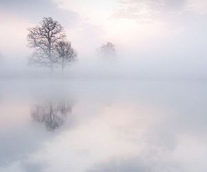tree, fog, and clouds image