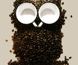 owl and coffe image