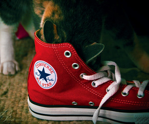cat, converse, and red image