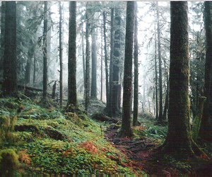 forest and woods image
