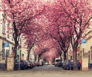 germany and pink image