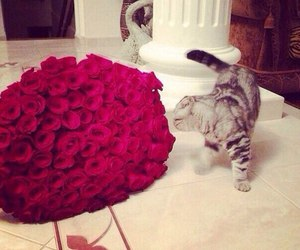 cat, flower, and gorgeus image