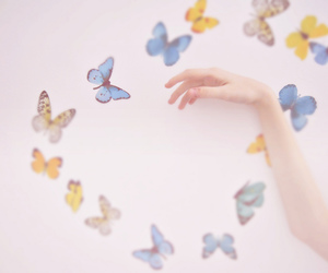 butterfly, girly, and hand image