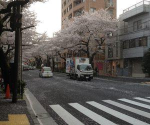 japan, aesthetic, and sakura image