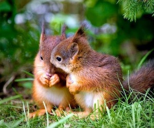 animal, squirrel, and nature image