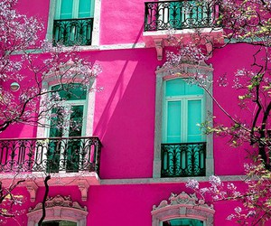cherry blossoms, exterior, and hot pink image