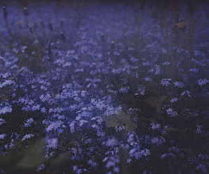 flowers, garden, and blue image