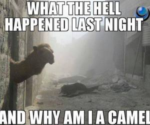 camel, drunk, and funny image