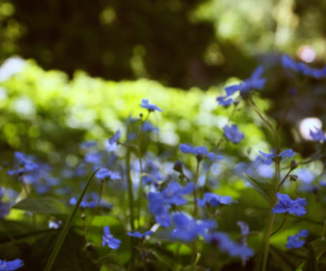 blue, flowers, and flower image