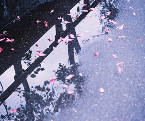 flowers, rain, and water image