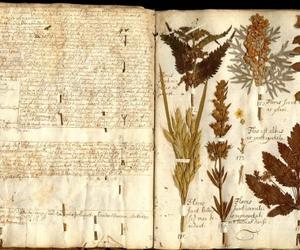 book, herbarium, and herbs image