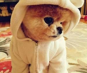 dog, cute, and boo image