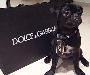 dog, black, and luxury image