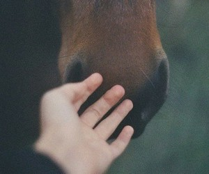 horse, hand, and animal image