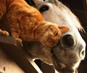 best friends, cat, and horse image